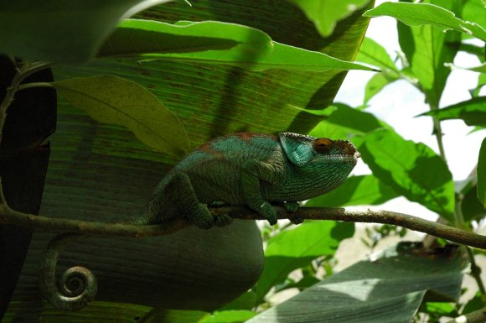 madagascar island rainforest