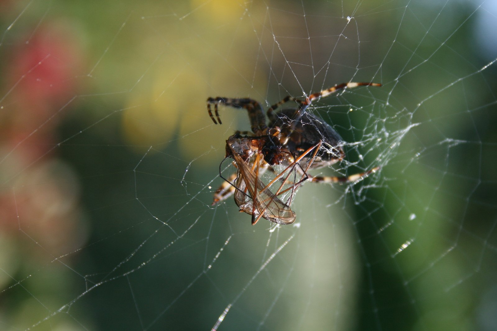 rainforest food chains spider
