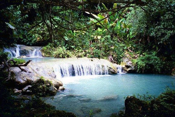 vanuatu rainforest