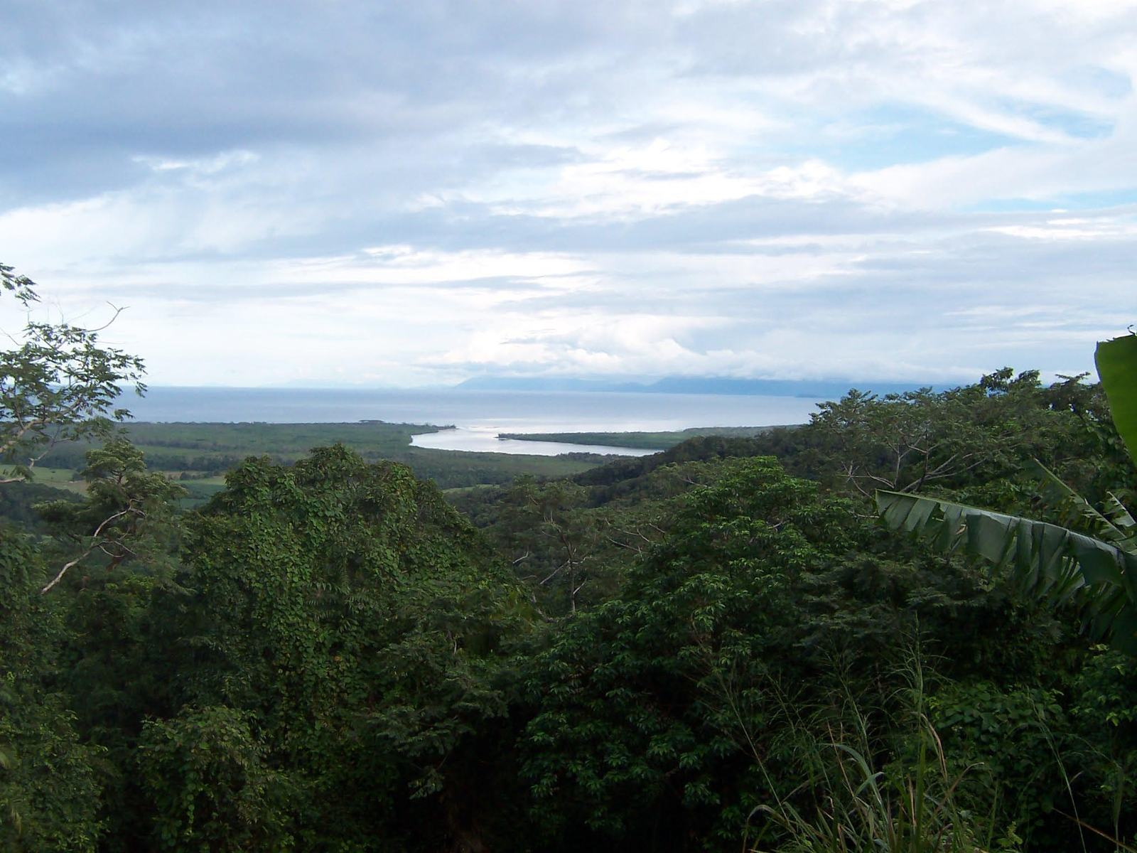 australia tropical rainforest