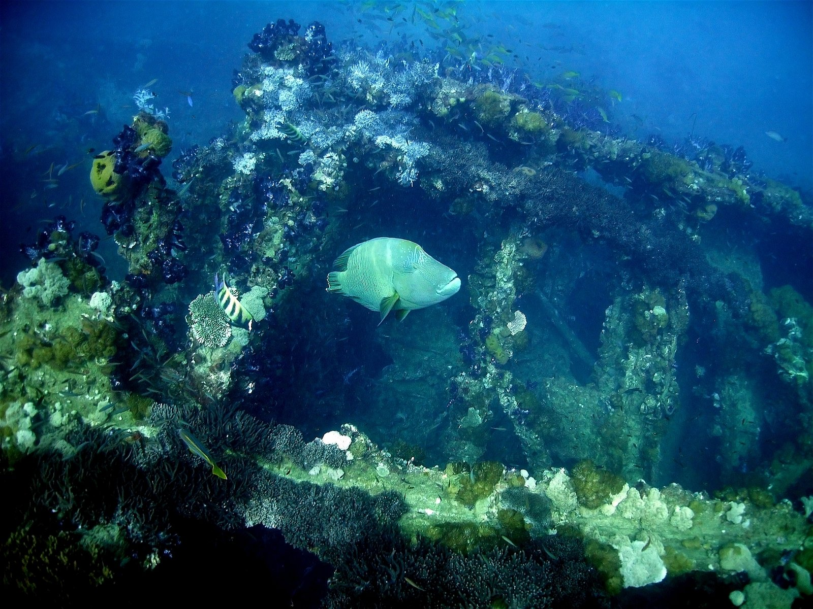 coral reef and global warming