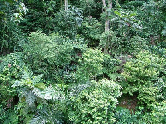 facts about asia rainforest