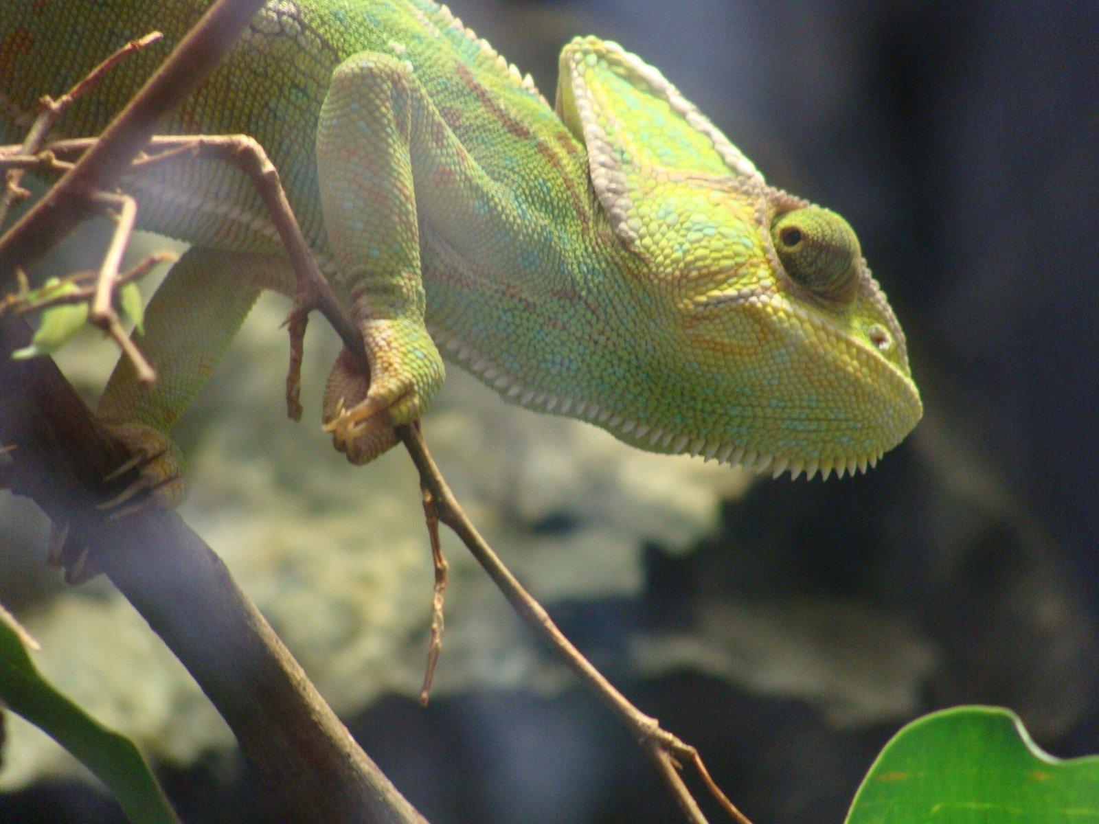 How Do Chameleons Change Color