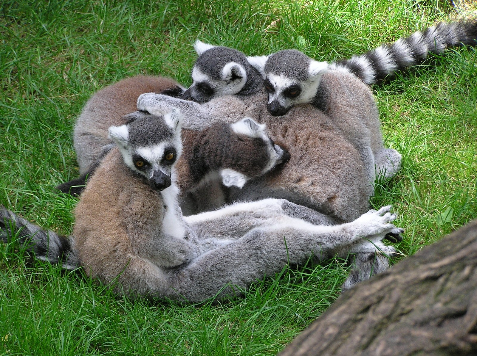 madagascar animals