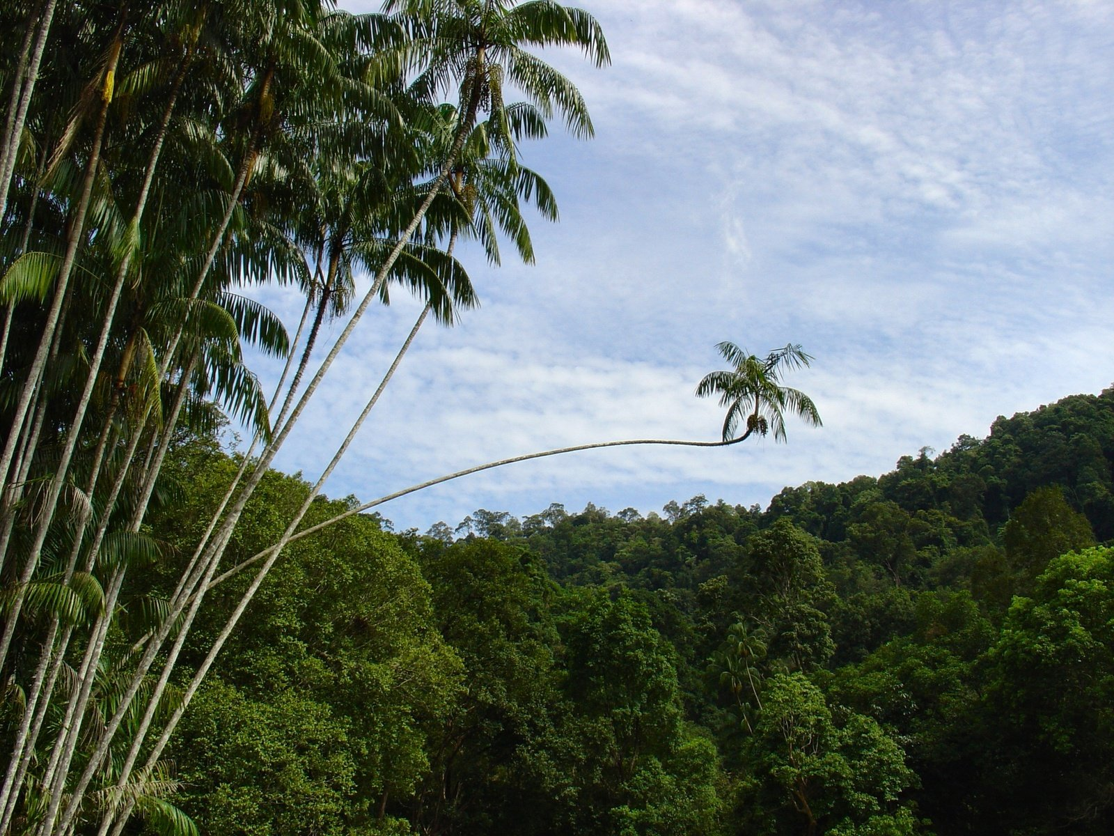 malaysian rainforest