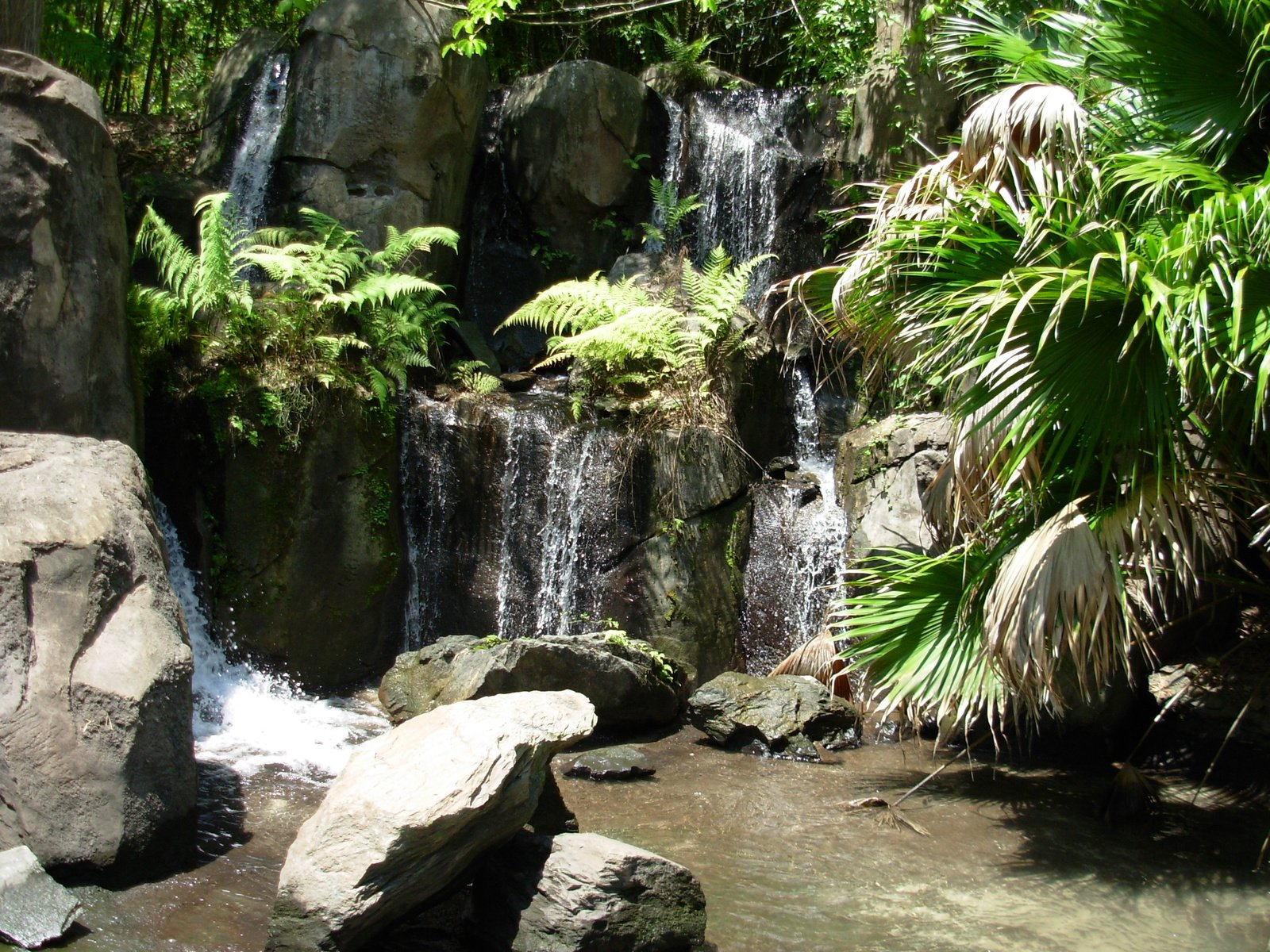 pictures of africa rainforest