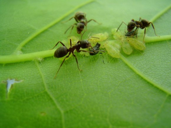 rainforest ants