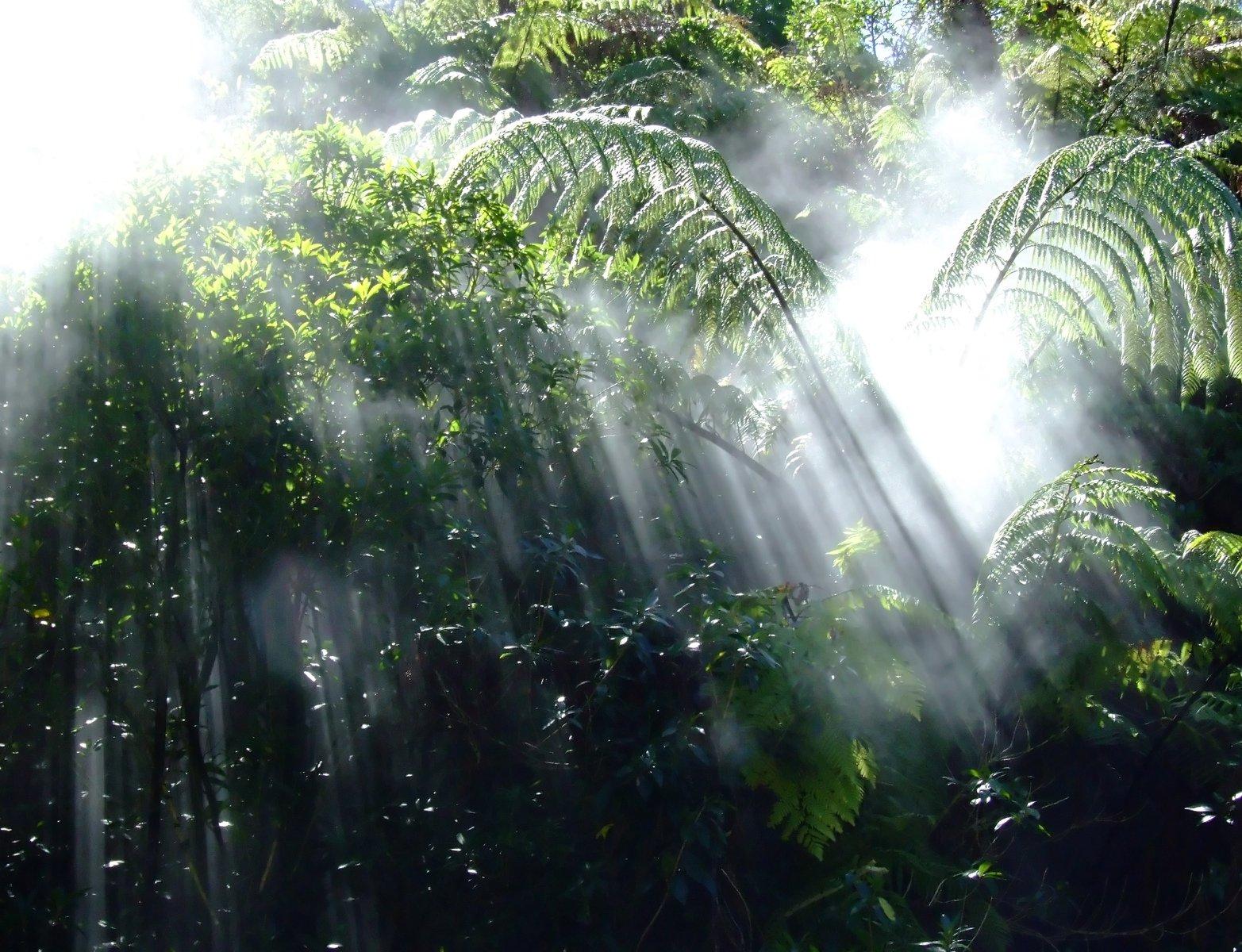 rainforest pictures