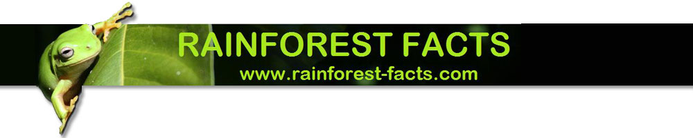 endemic animals in the rainforest