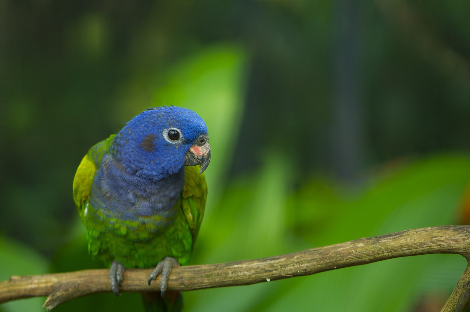 parrots in the rainforest