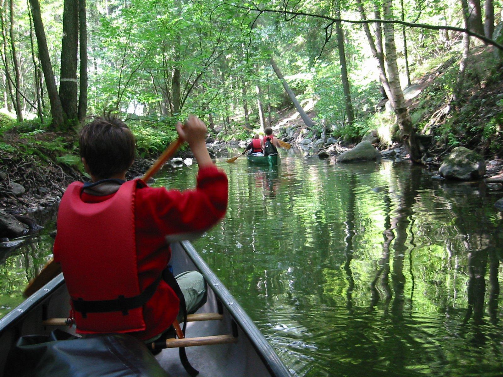 rainforest activities