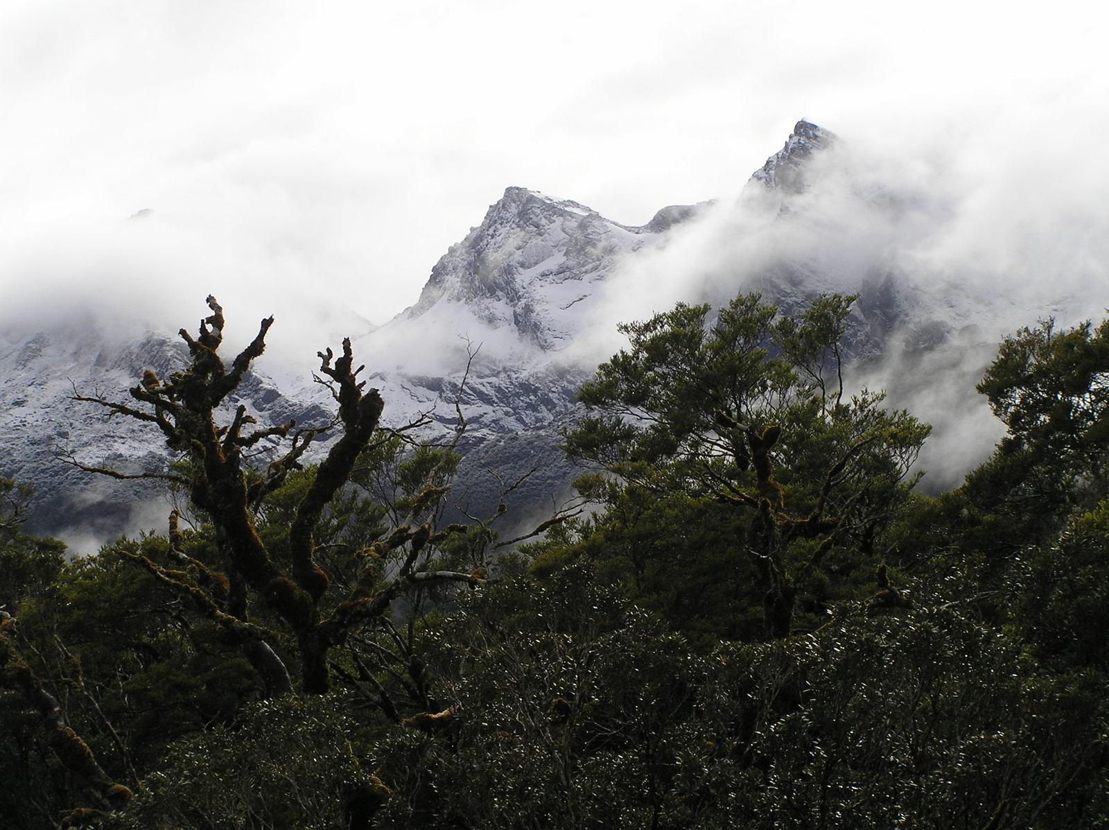 temperate rainforest climate