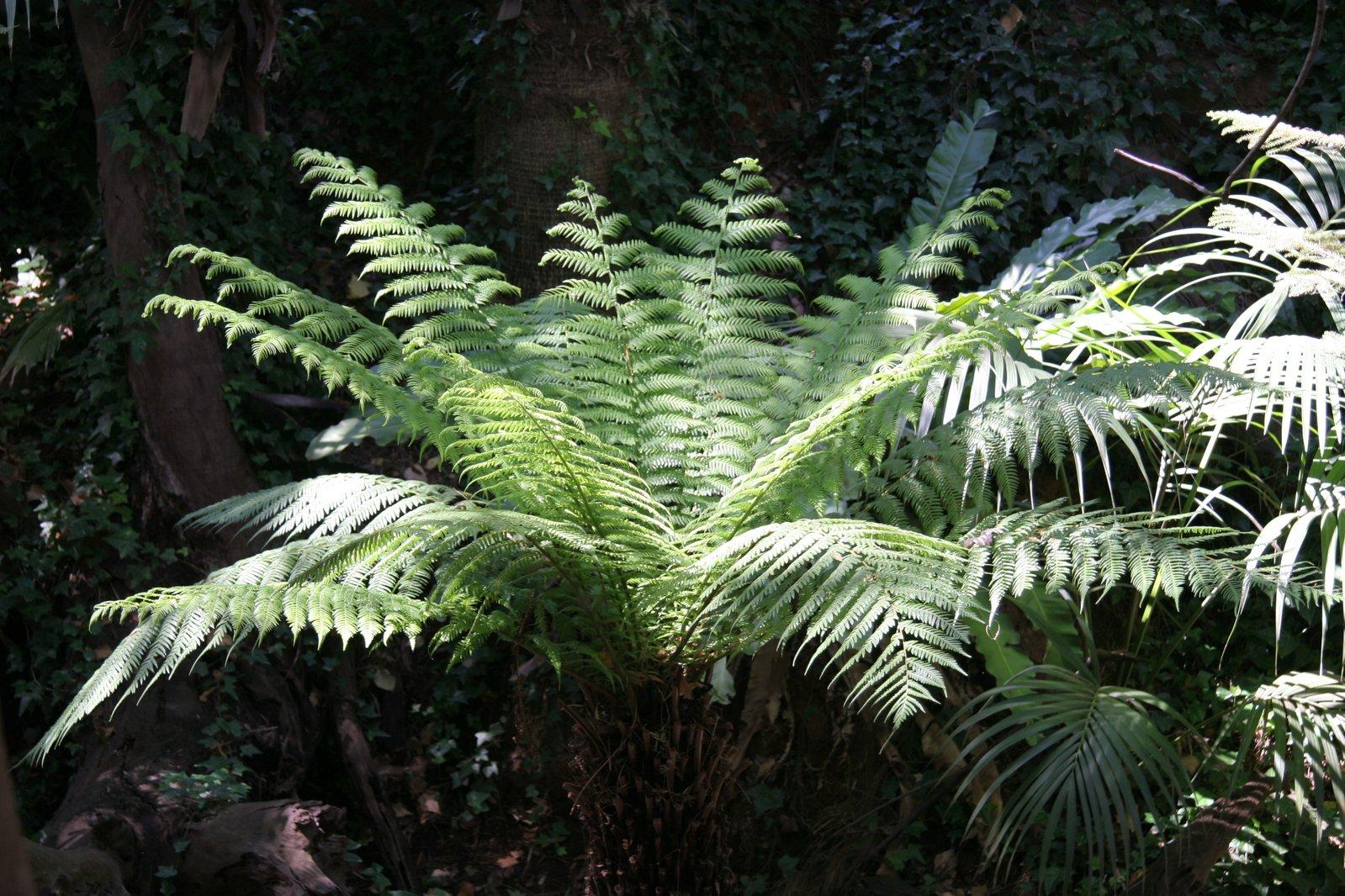 temperate rainforest plants