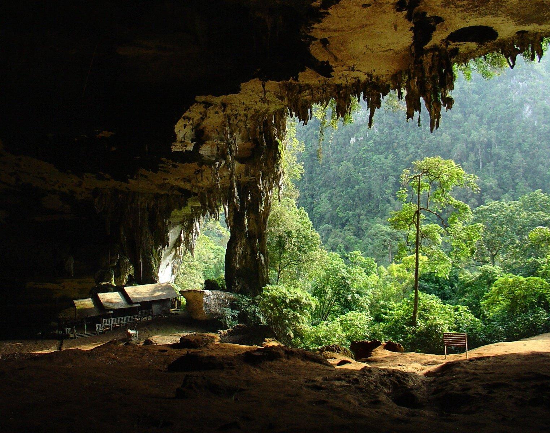 where is borneo rainforest