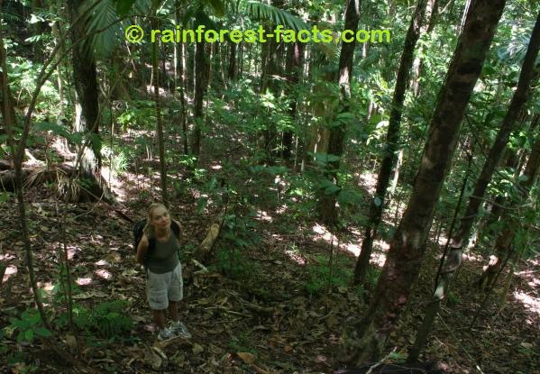 about rainforest facts