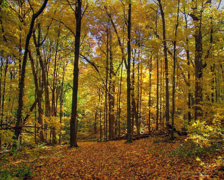 deciduous forest autumn