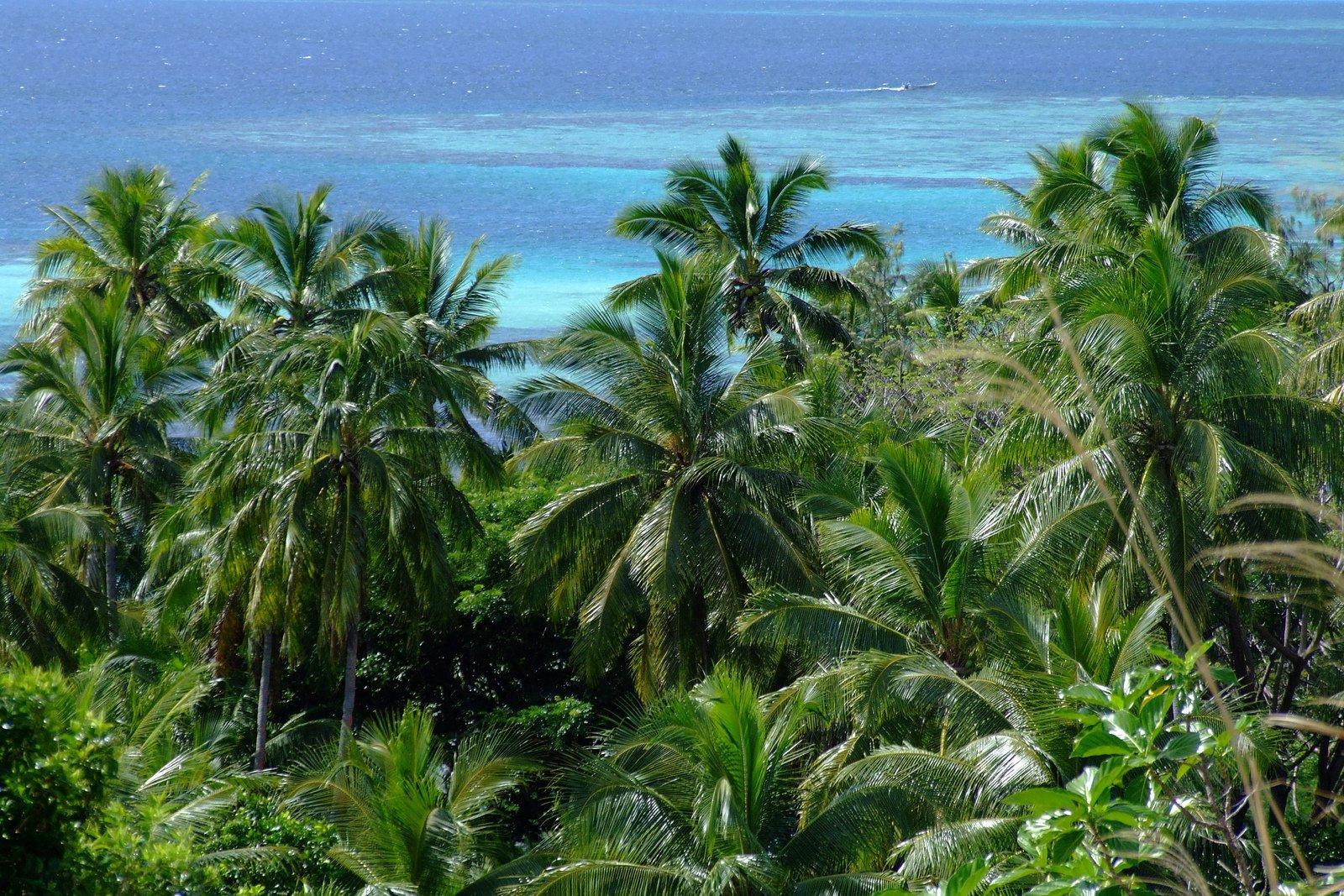 fiji rainforest