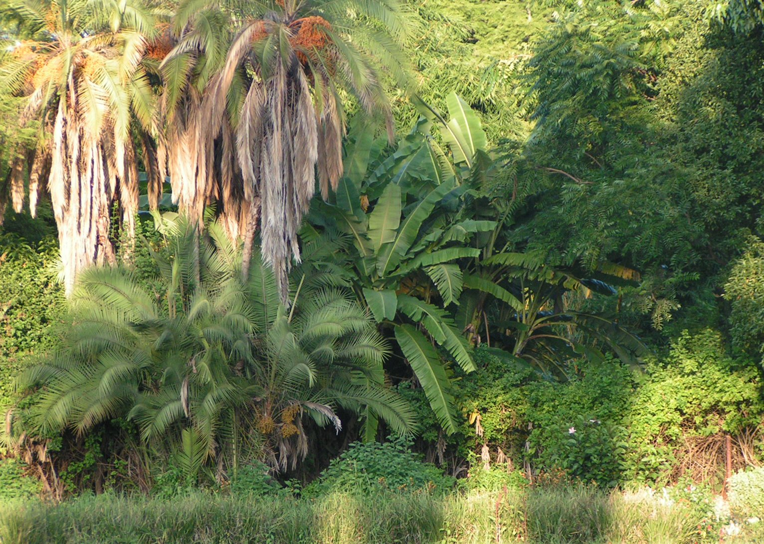 pictures of africa tropical jungle