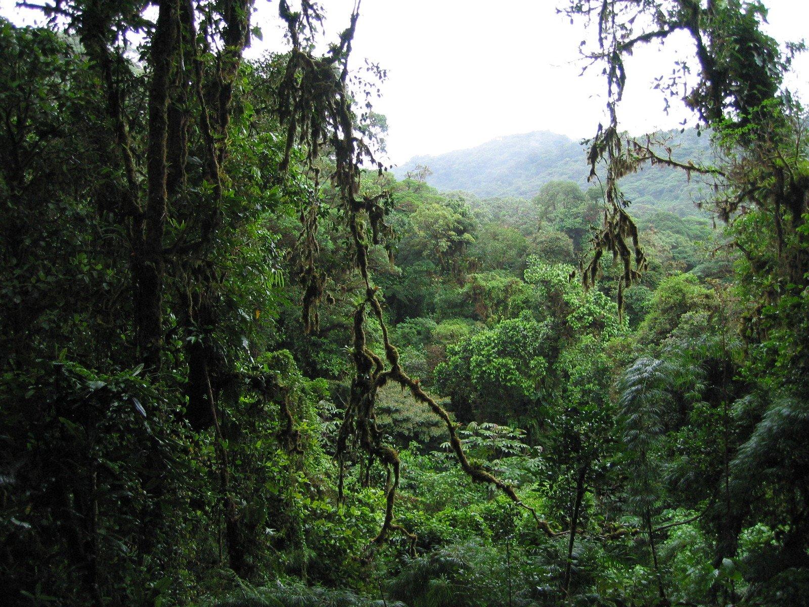 rainforest destroyed
