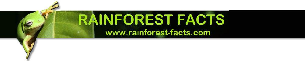 rainforest facts blog