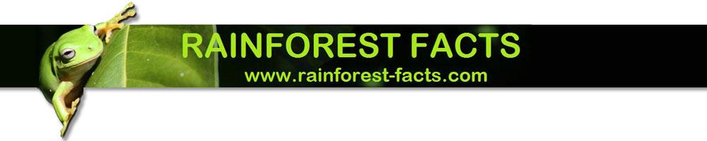 rainforest information