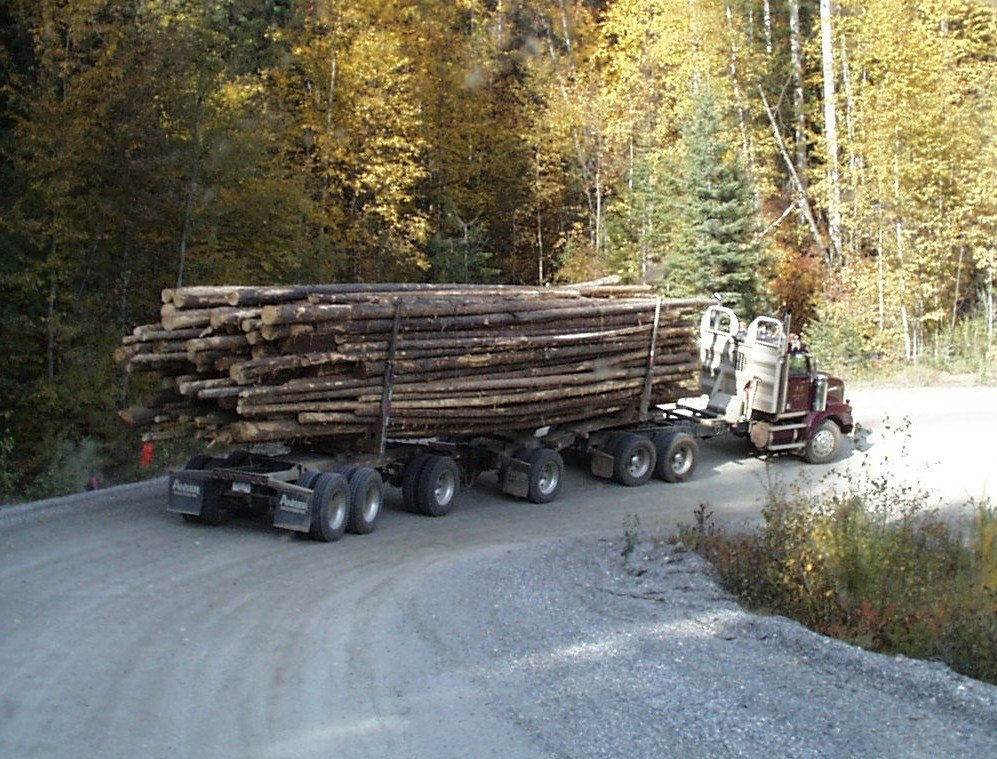 rainforest logging