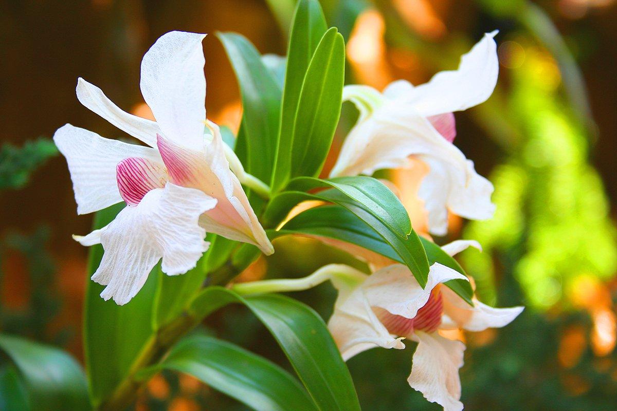 rainforest orchid