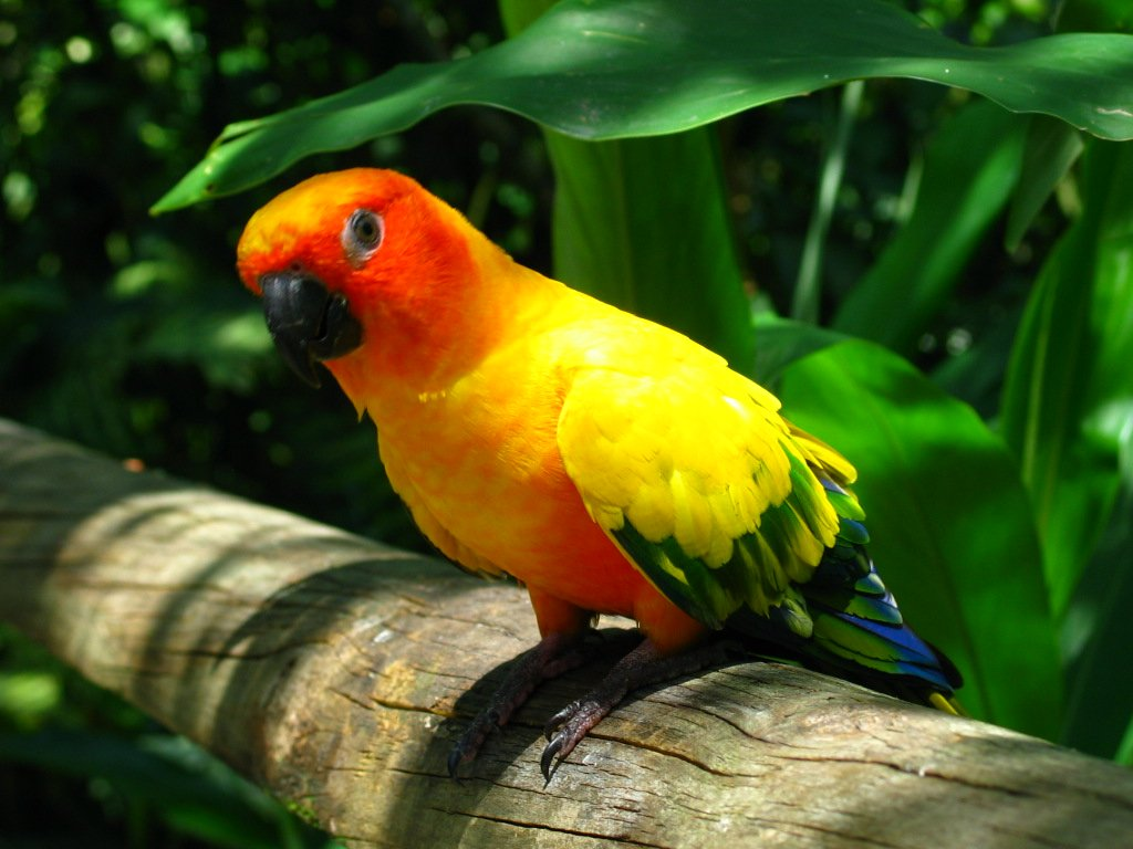 rainforest parrot