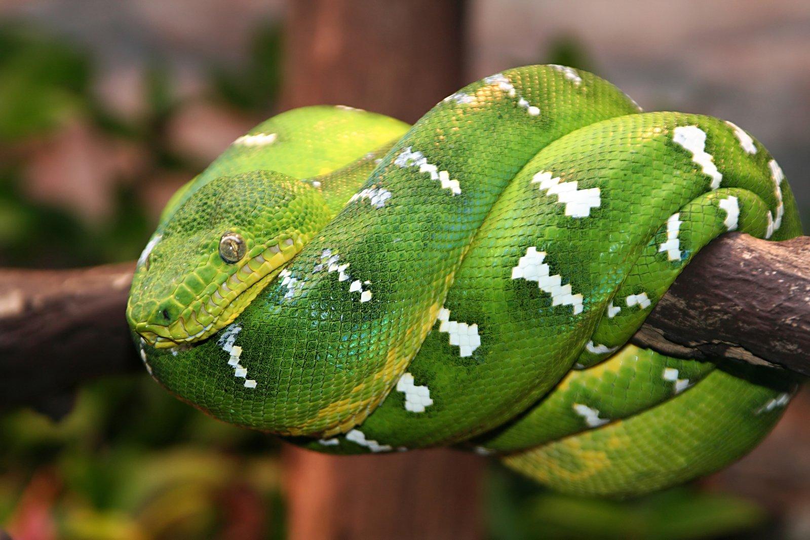 rainforest snake