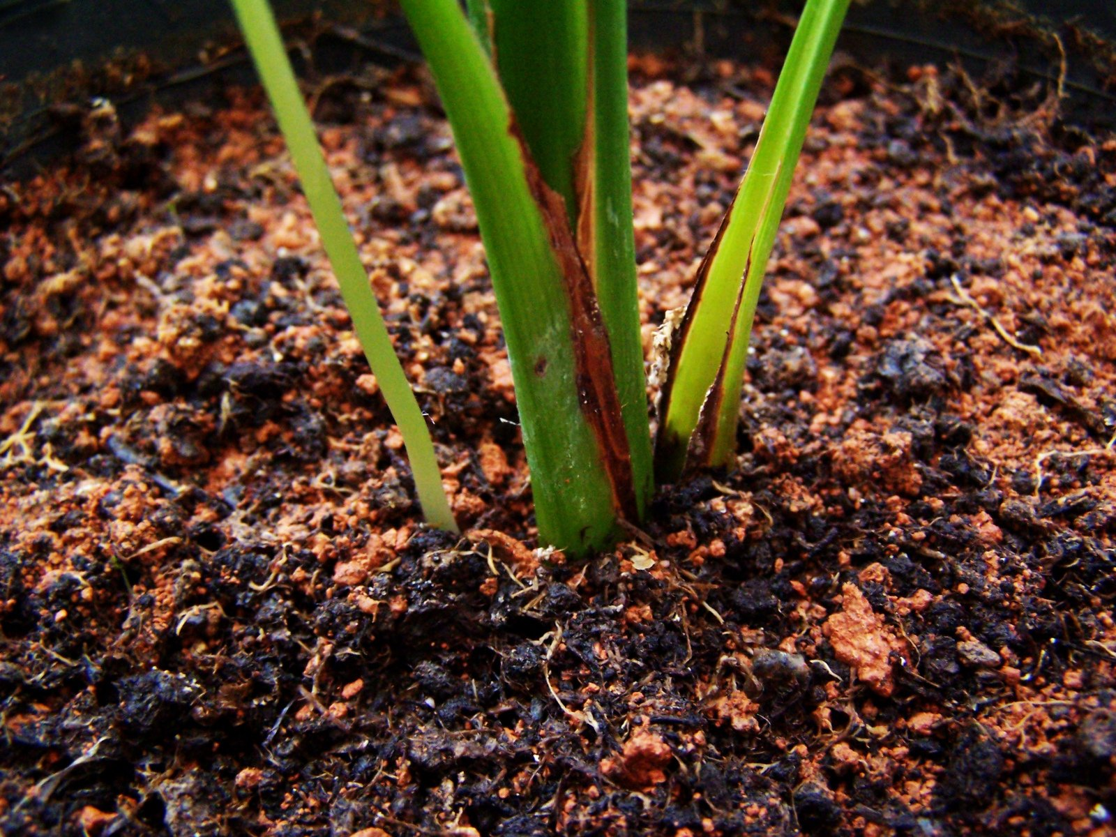 rainforest soil