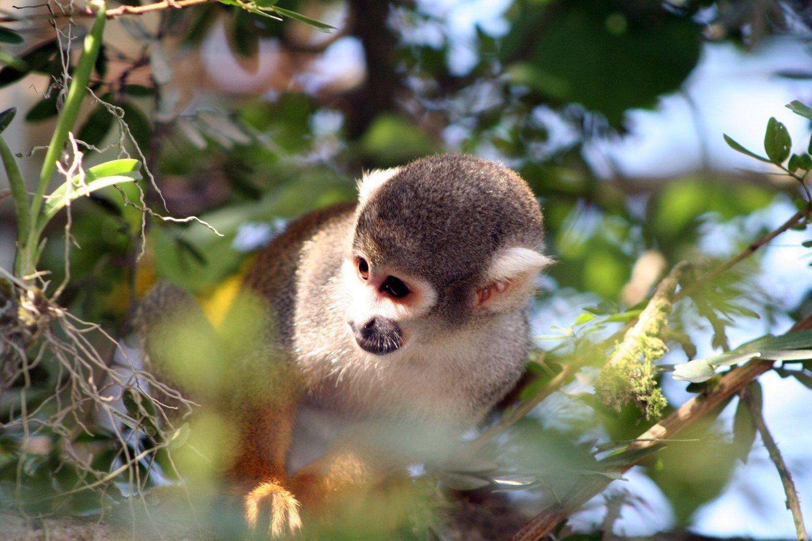 south american rainforest peru