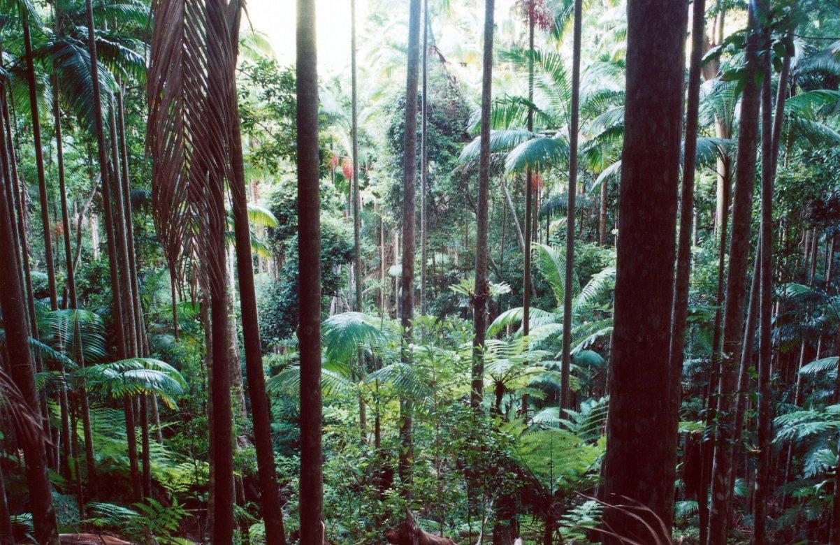 temperate rainforest asia