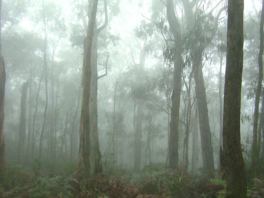 temperate rainforest australia
