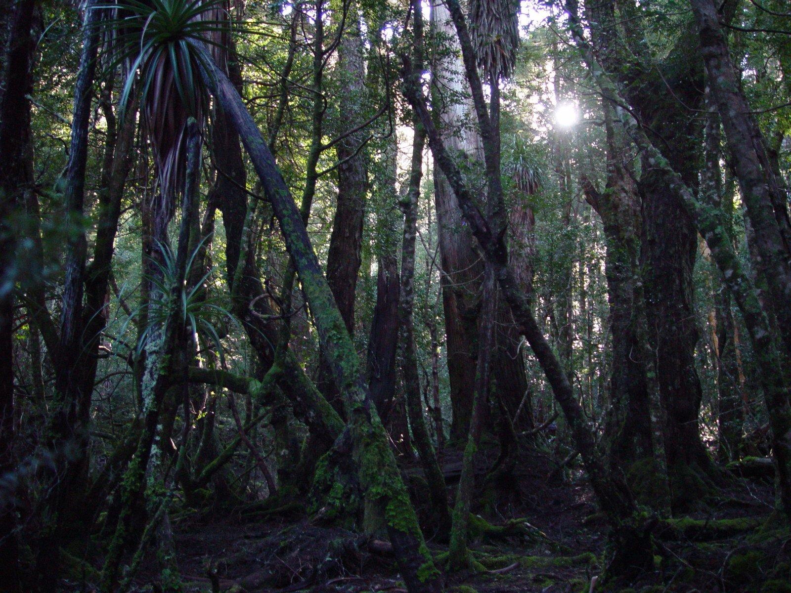temperate rainforest australia tasmania