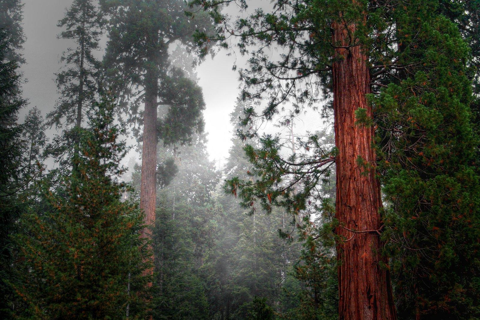 temperate rainforest north america