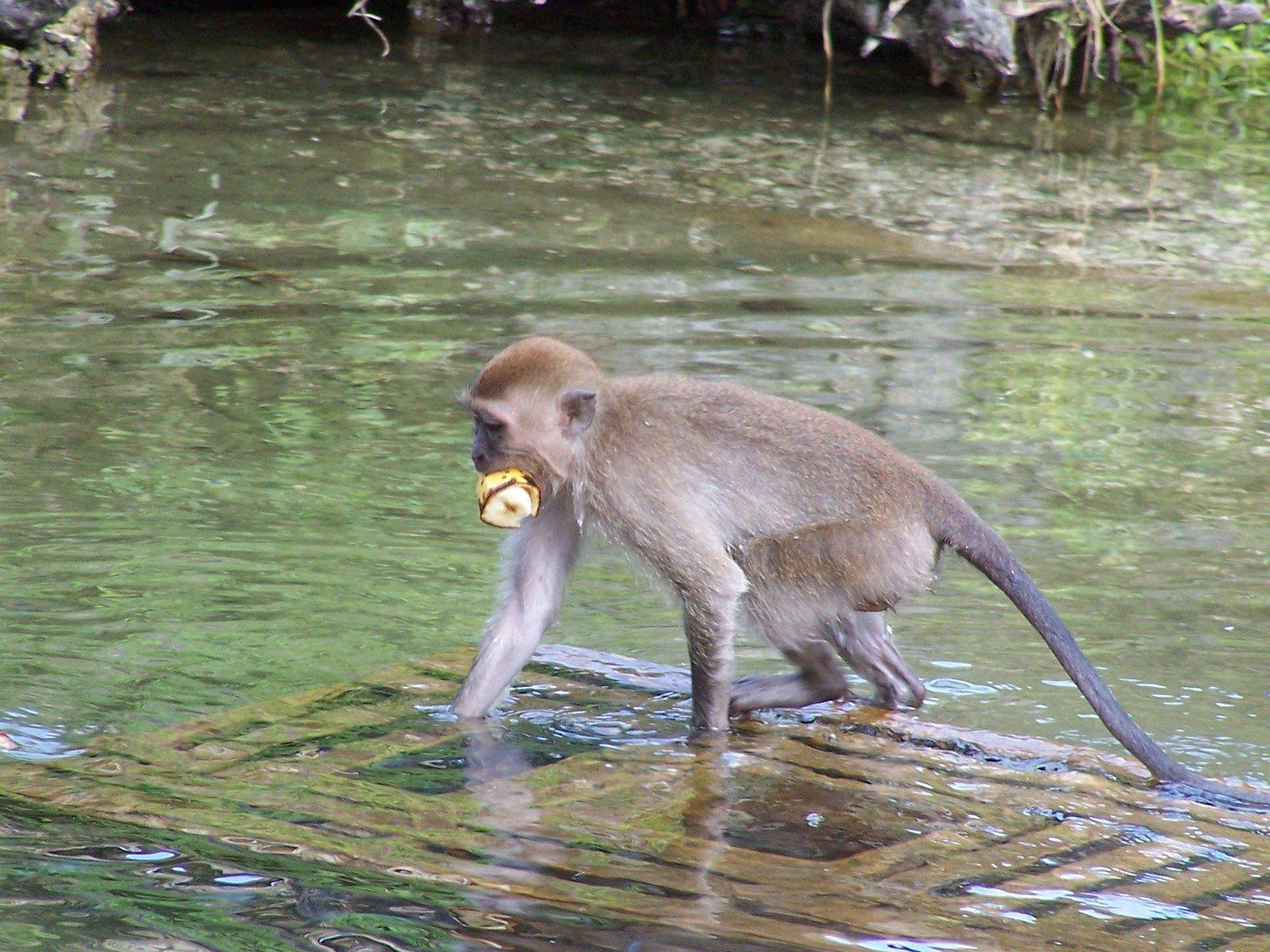 tropical rainforest food chain monkey