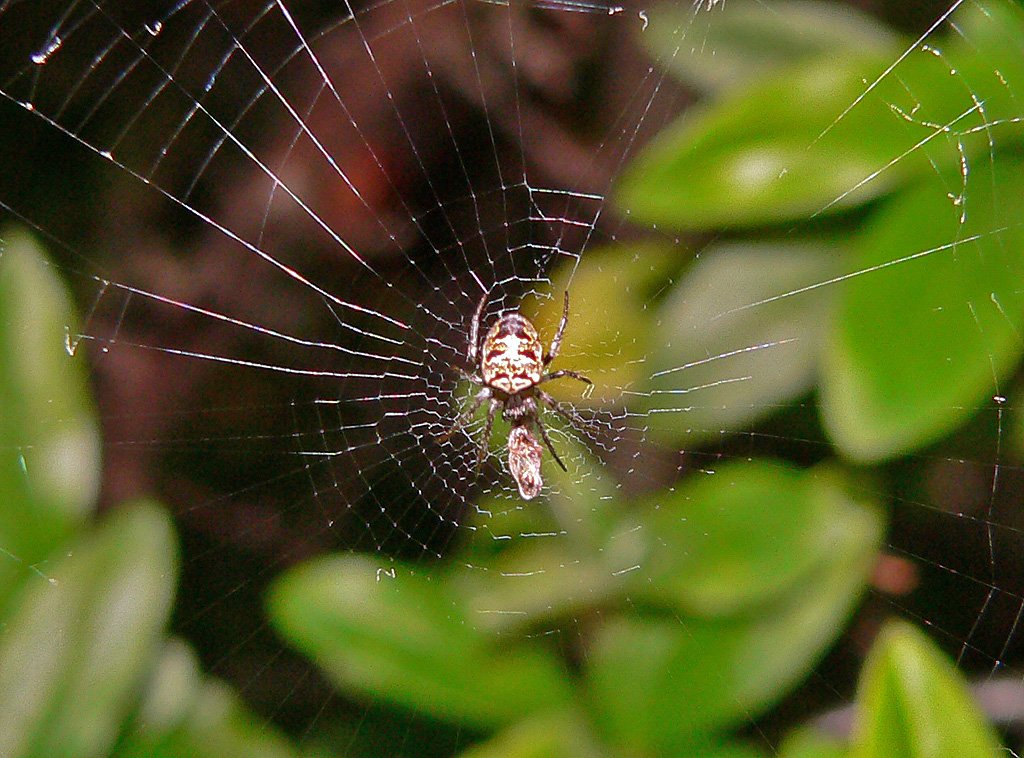 tropical rainforest food chain spider