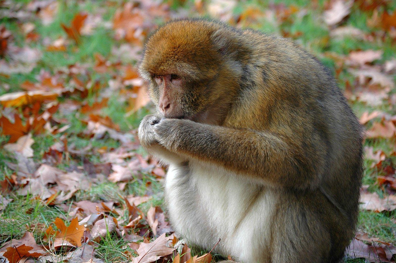 tropical rainforest food web monkey