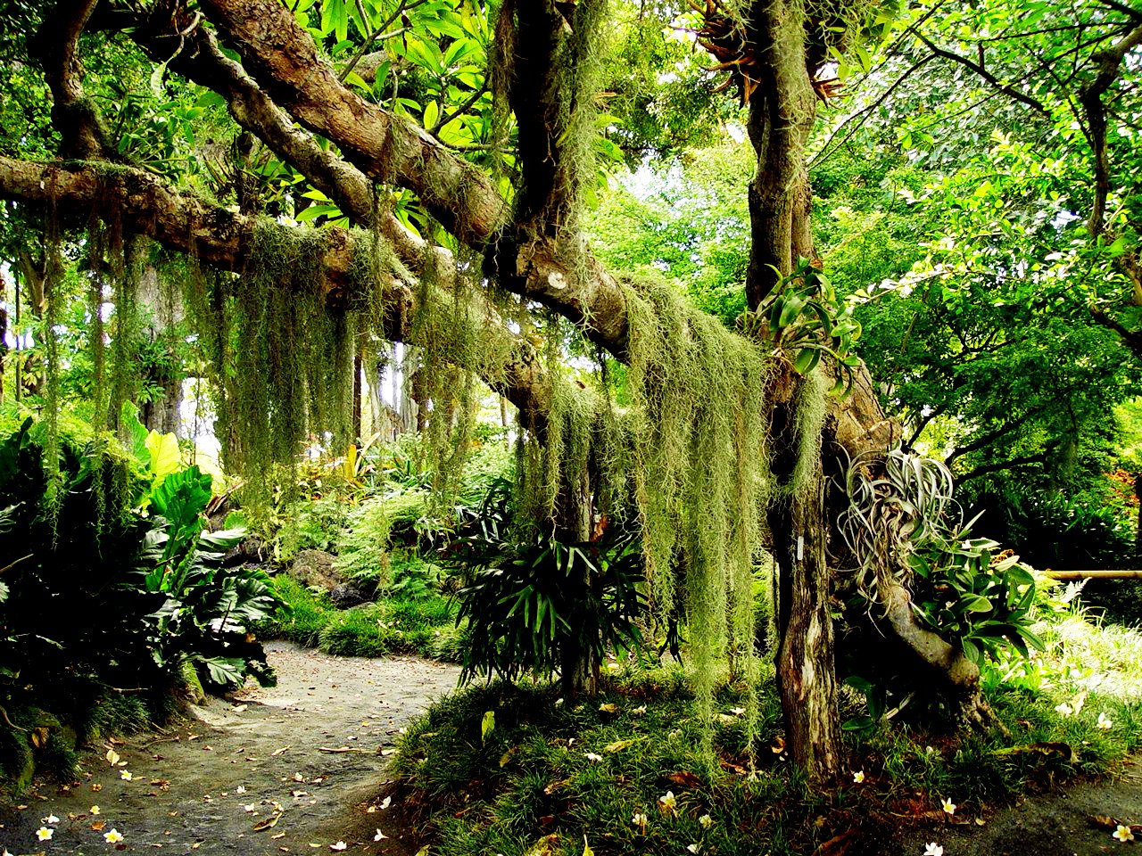 tropical rainforest plants